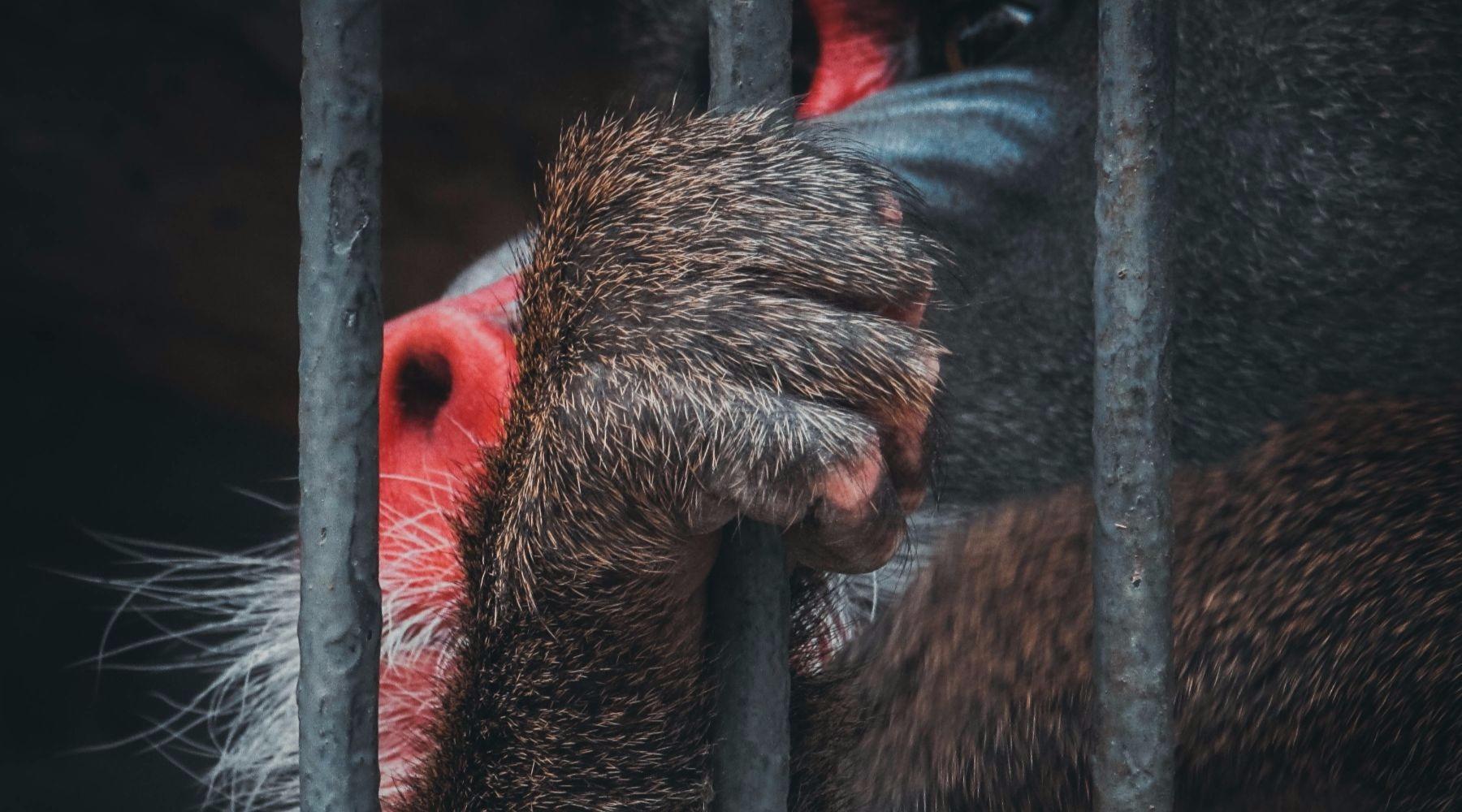 Waarom je niet naar de dierentuin zou moeten gaan