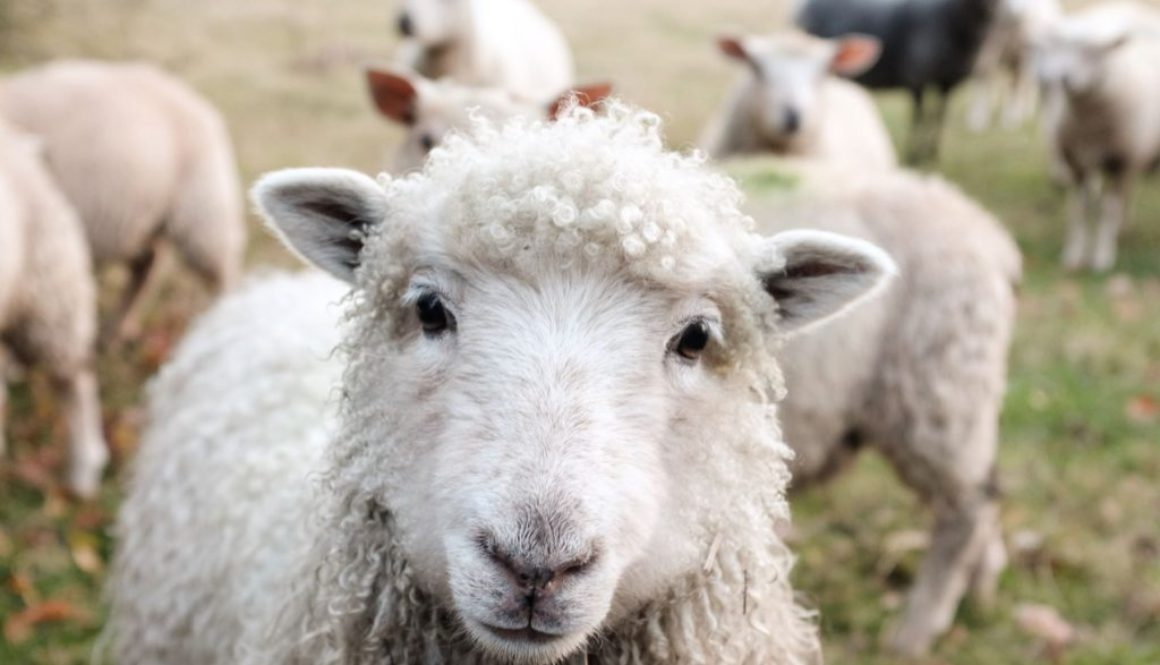 Why you shouldn't buy wool anymore