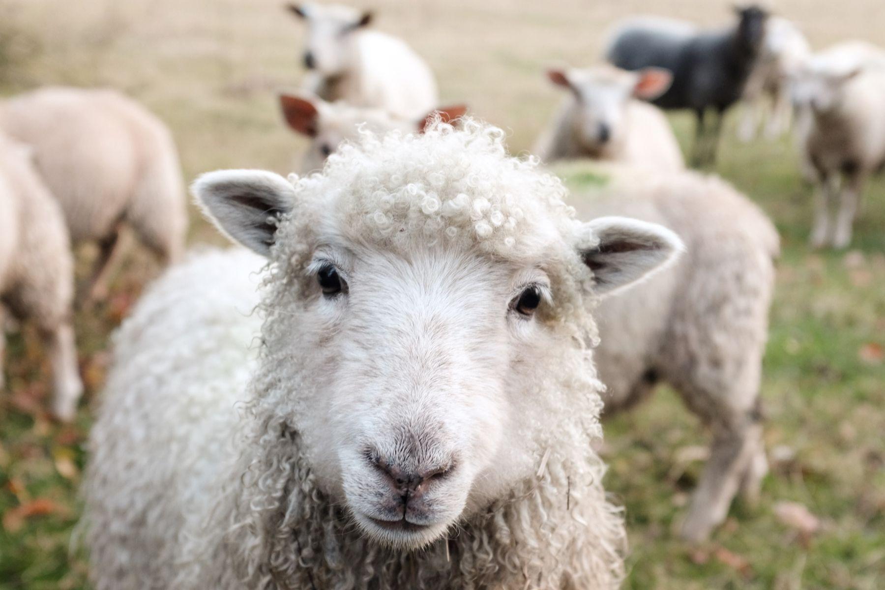 Waarom je geen wol meer zou moeten kopen