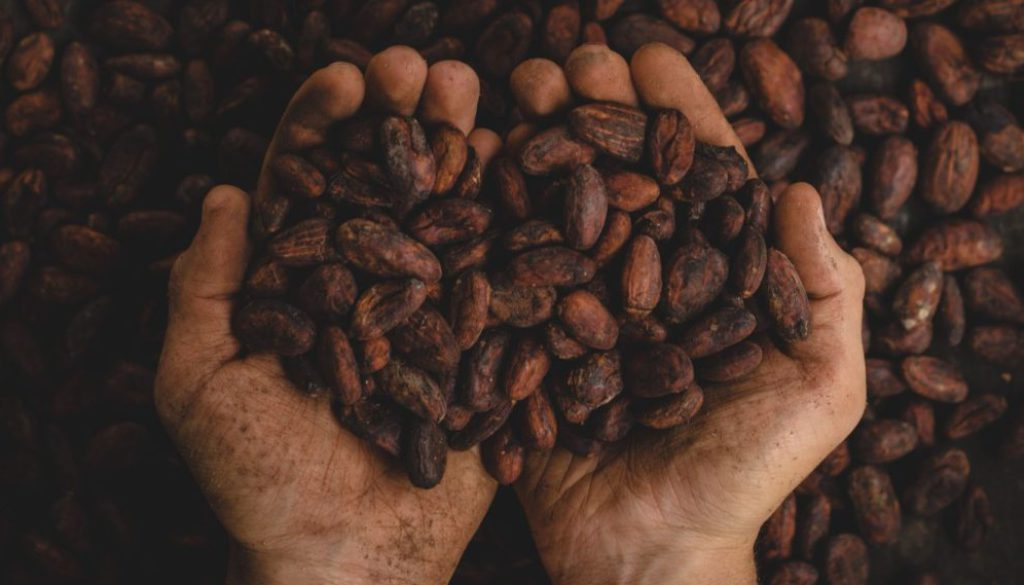 The suffering in the cocoa industry