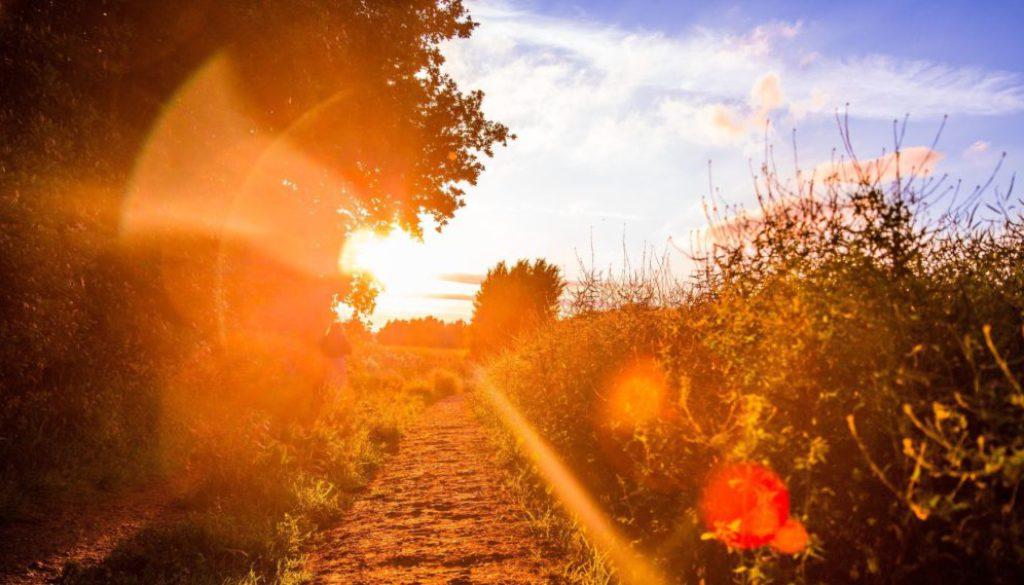 Waarom is vitamine D zo belangrijk?