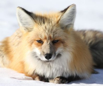 Why the fur industry is cruel and bad for the environment