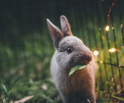 De konijnenindustrie