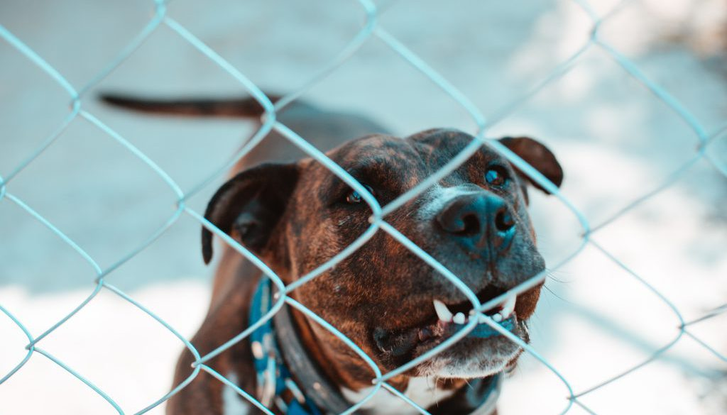 Dierproeven deel 3: Regels rondom dierproeven