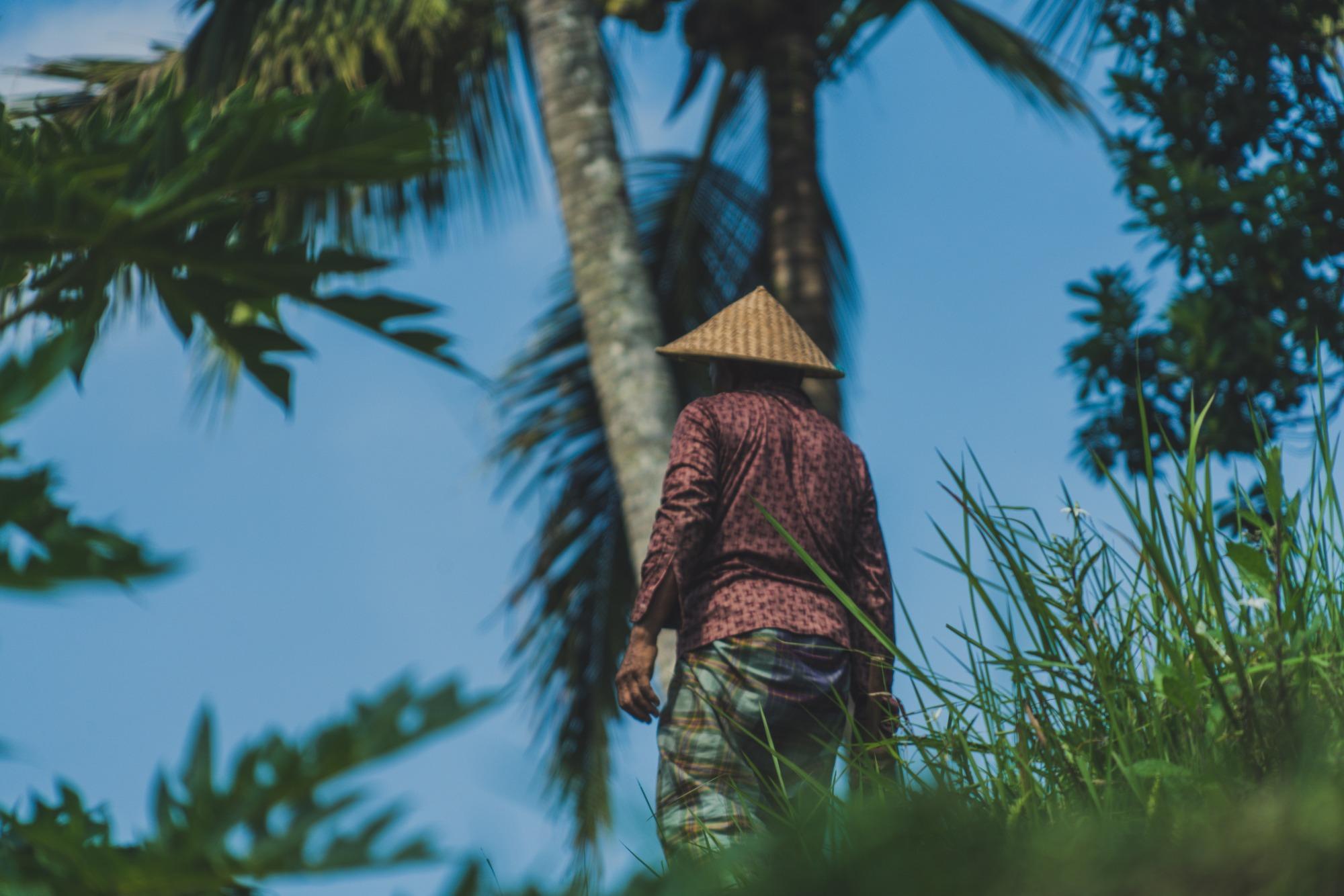 Palmolie en neokolonialisme