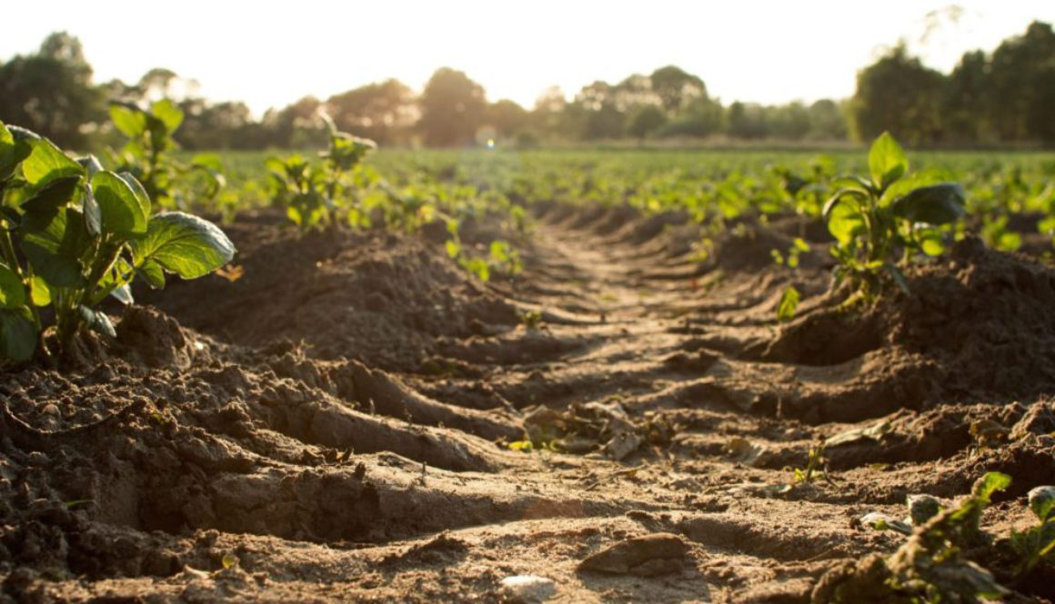 Why we are better off without animal manure