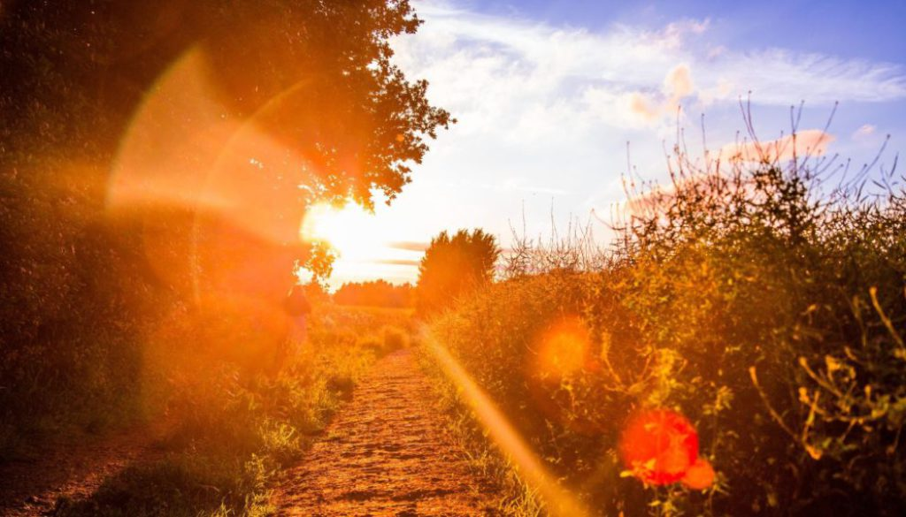 Why is vitamin D so important?