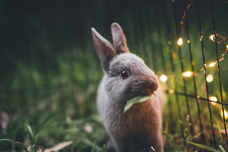 The rabbit industry