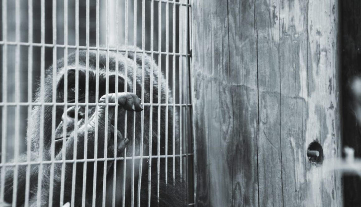 Animal testing part 1: What are animals used for?