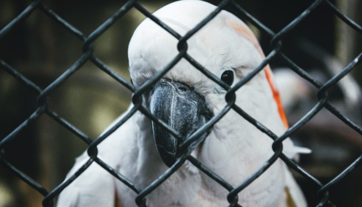 Animal testing part 2: What animals are used?