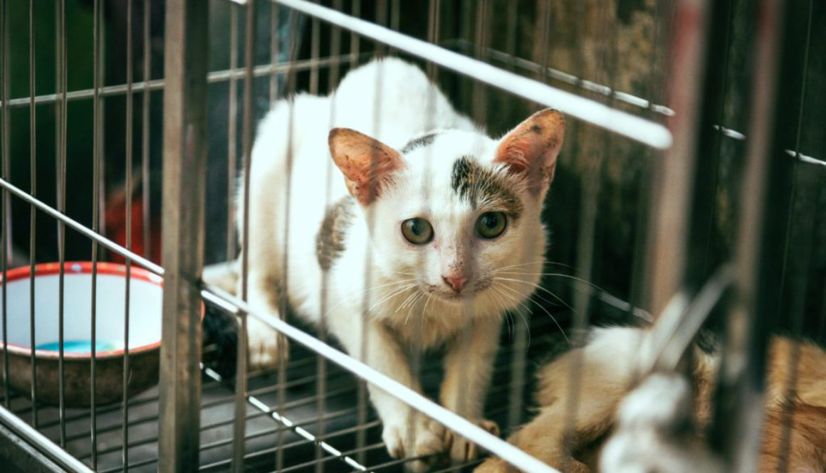 Animal testing part 4: Why animal testing is problematic