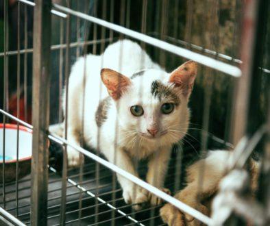 Dierproeven deel 4: Waarom dierproeven problematisch zijn